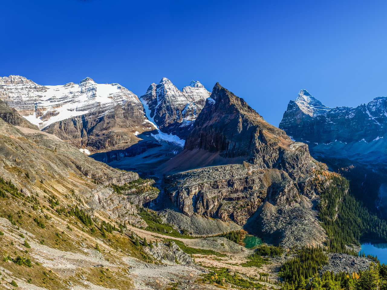 The trail down from the col to Lake O'Hara is obvious.