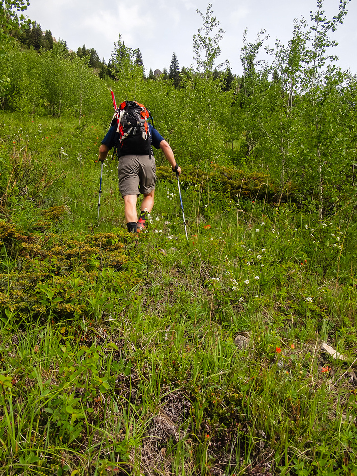 Lots of low bushes and light - moderate bush whacking.