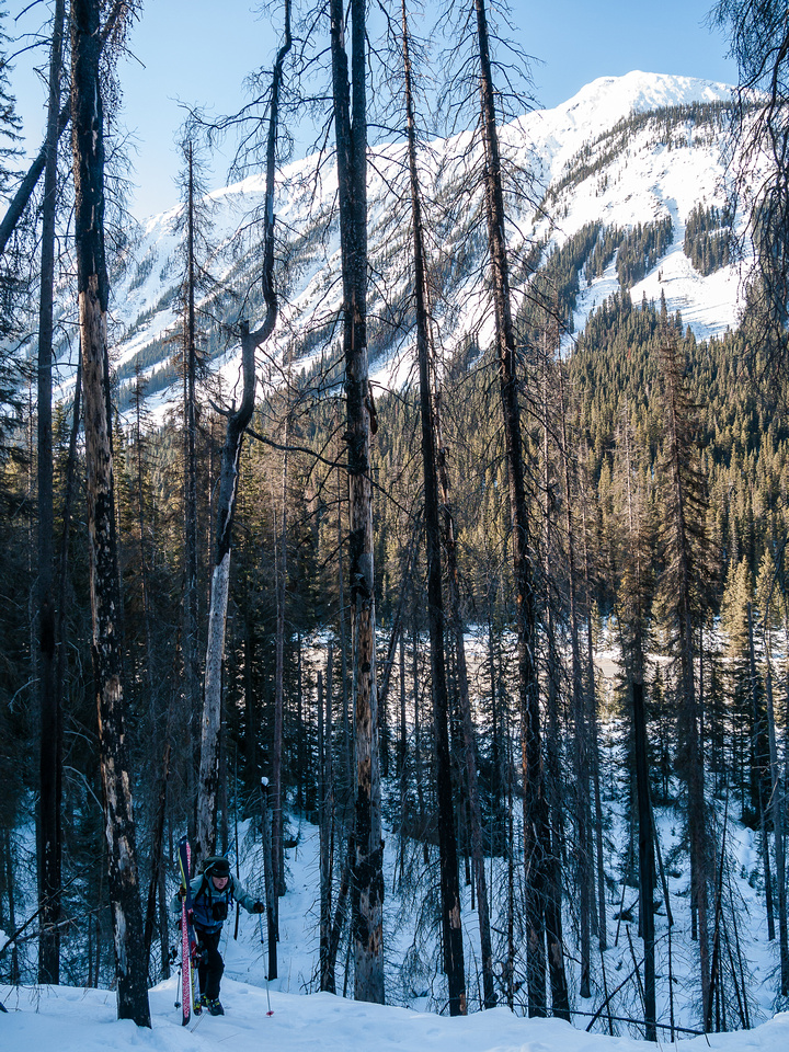 Skiing up the Vermilion Peak burn.