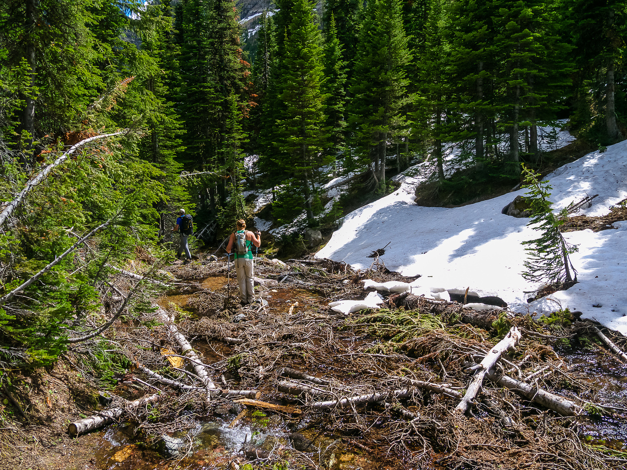 Back through the deadfall towards Goat Lake.