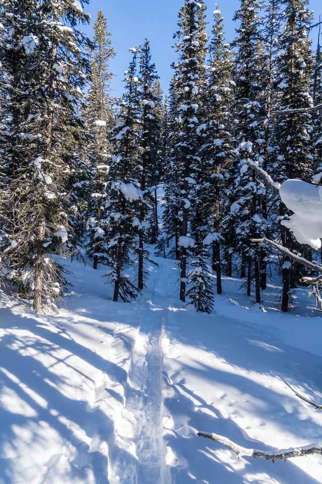 Following tracks off trail towards Silverton Creek and the lower south slopes of Helena Ridge.