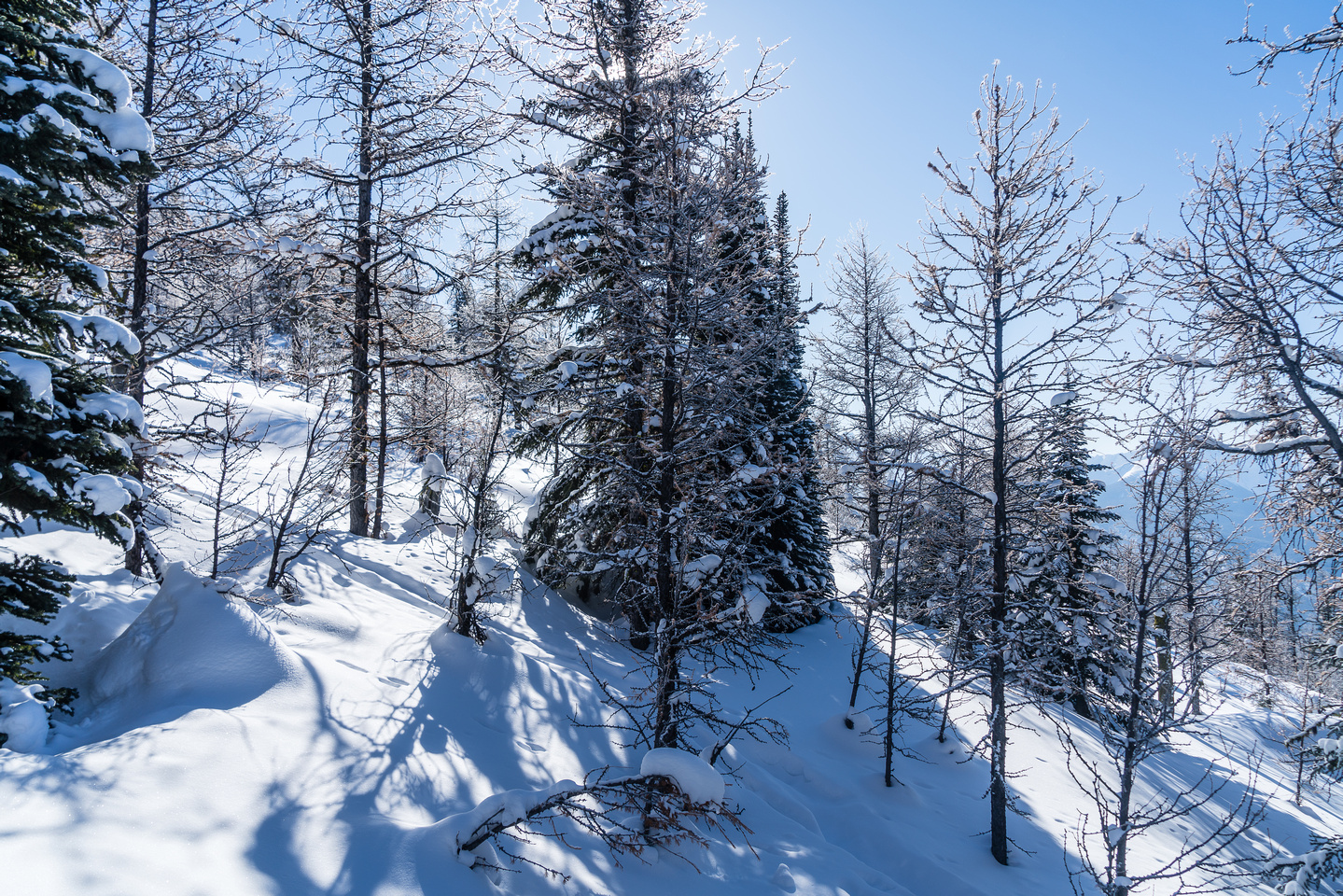 A gorgeous morning as I approach larch forests near treeline on the ridge. It's still -20 though!