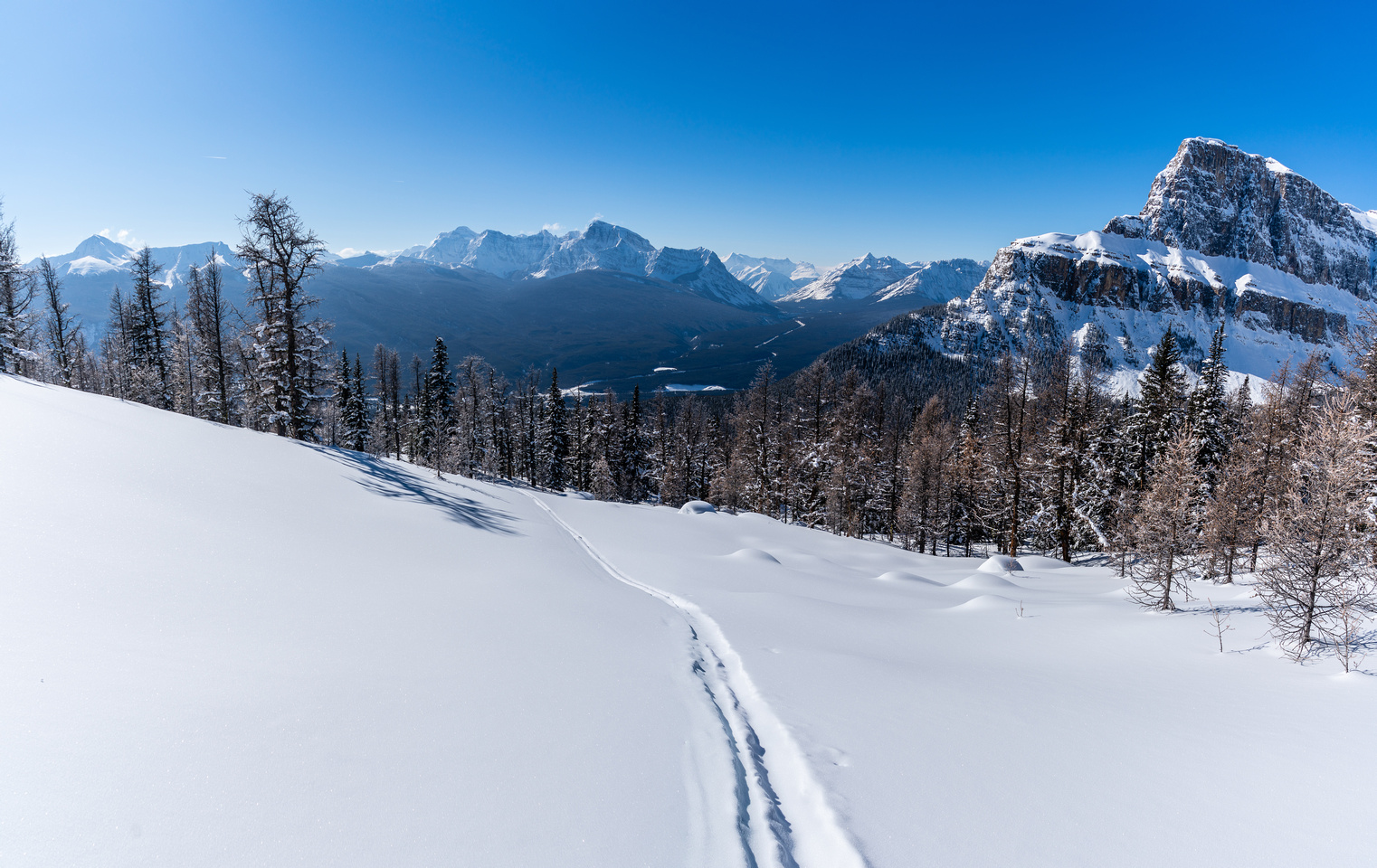 Skiing through the larch forest.