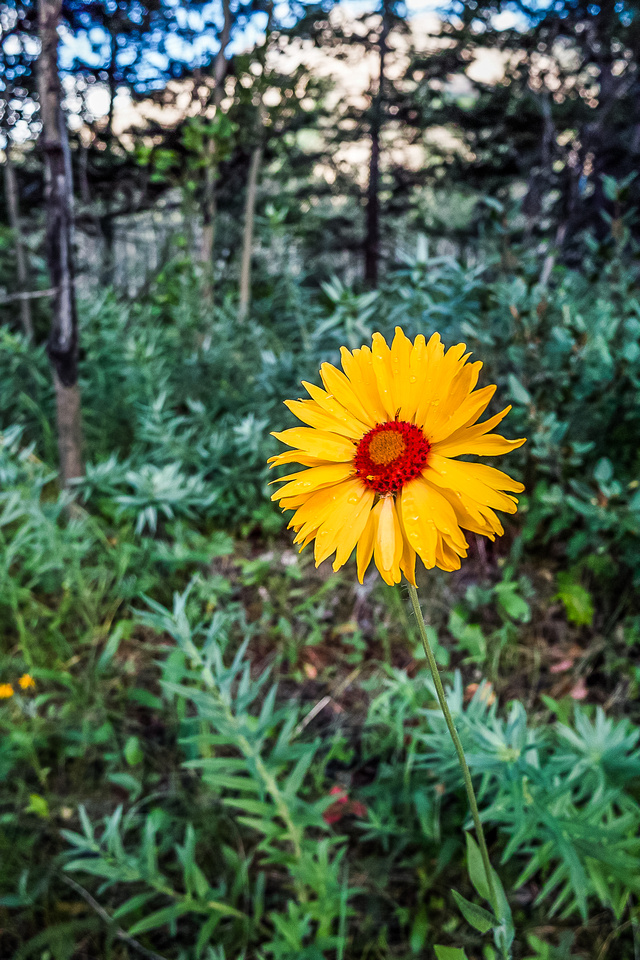 A flower to brighten the past 2 hours of bushwhacking hell.