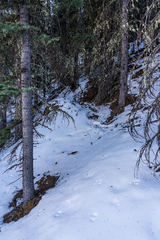 Yep. That's a bear den! Didn't linger to take more pics... :)