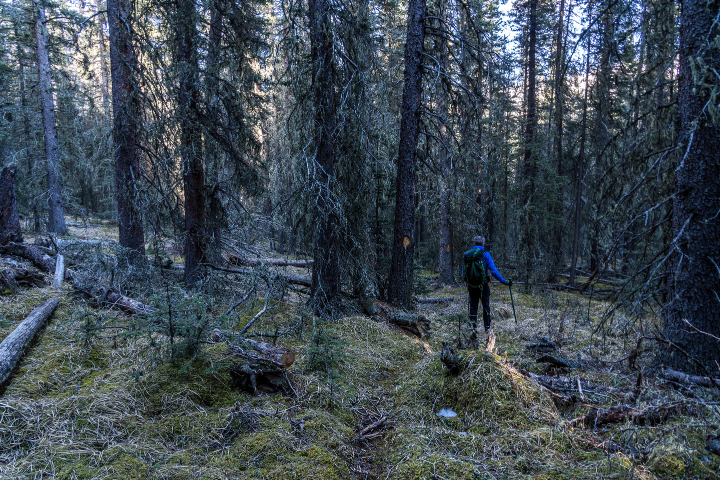 On a faint trail in light forest.