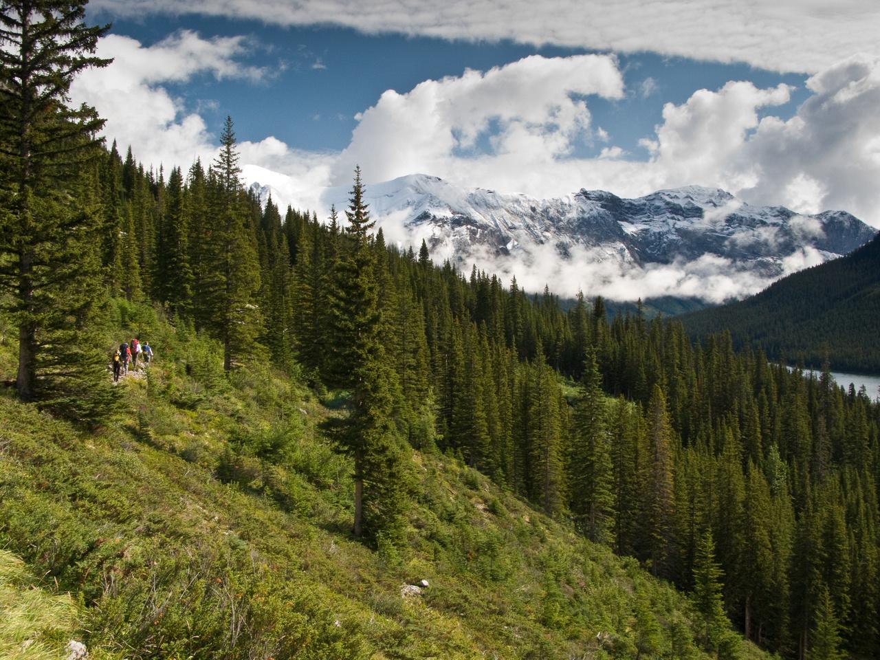 Wonder Pass Trail