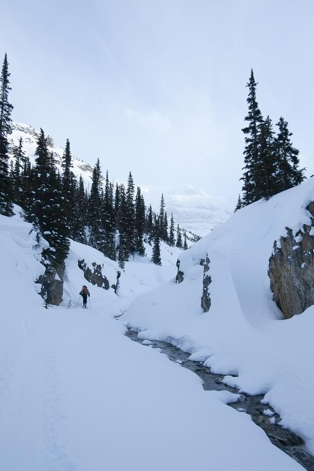 Skiing up Bow Canyon.