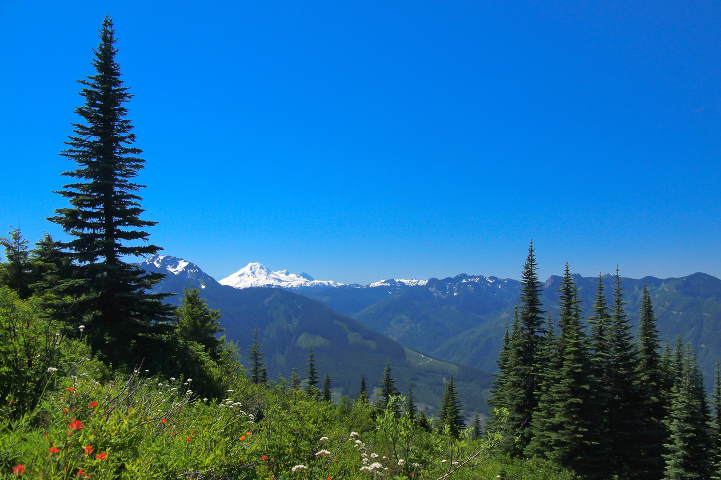 Mount Baker with wild flowers - never get tired of this scenery!