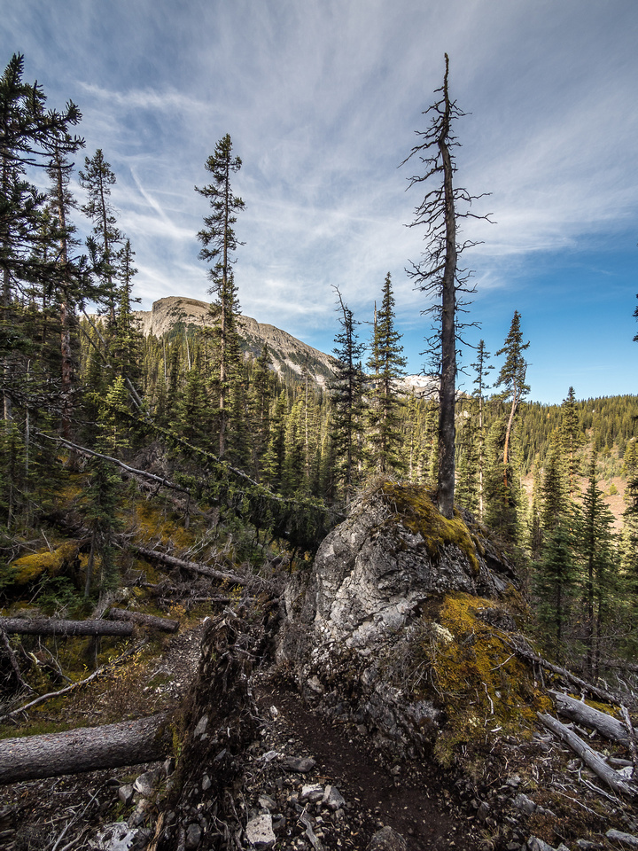 In Golden Valley, trees grow straight off the top of some of the boulders along the trail. How many years does that take?