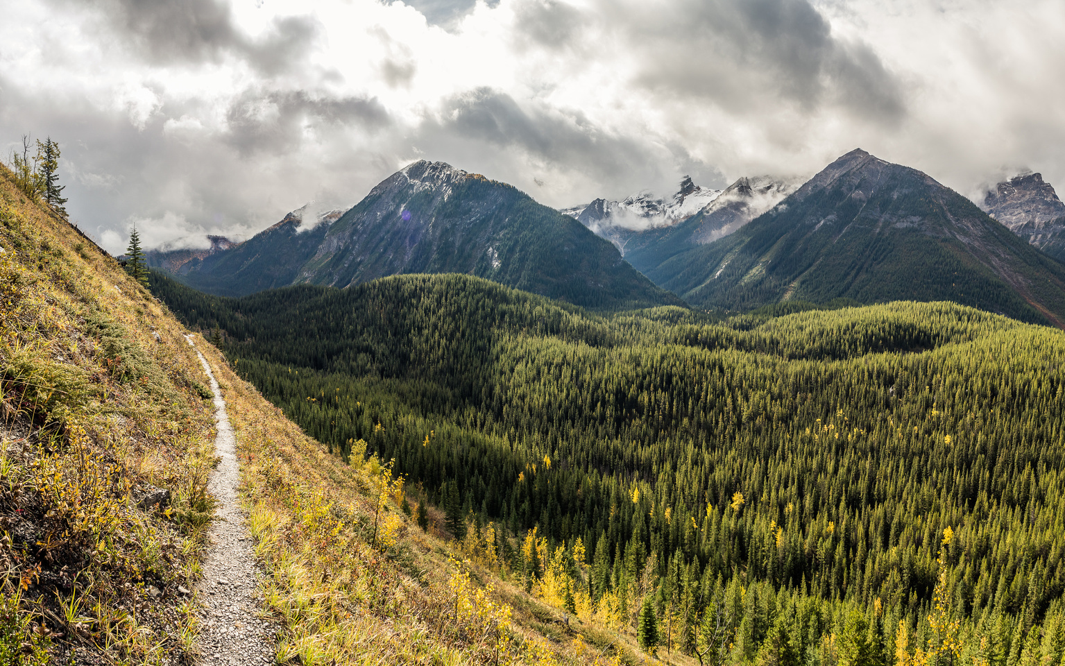 One of the highlights of the Sunshine approach is this section of about 1-2km where the trail cuts across a very steep, grassy slope high above the Simpson River (R) along the SW slopes of Golden Moun