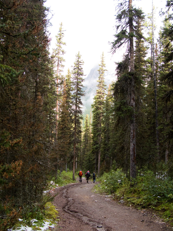 The Bryant Creek trail is a road for 14km.